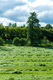 Fresh mowed grass in a meadow Stock Photo