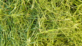 Fresh mowed grass Stock Photography
