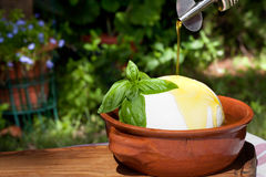 Fresh Mozzarella With Oil And Basil Royalty Free Stock Photos