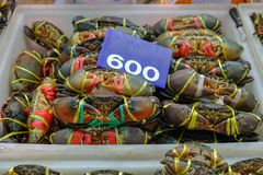 Fresh mud crabs will be prepared for sale to customers at the seafood market stock photo