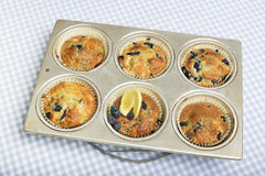 Fresh muffins in baking tin. Stock Photography