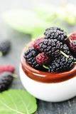Fresh mulberries Royalty Free Stock Images