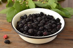 Fresh mulberry Stock Image