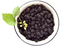 Fresh mulberry in the enameled bowl Stock Photos