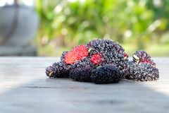 Fresh Mulberry fruits on wood background, ..Mulberry with very useful for the treatment and protect of various diseases.  royalty free stock image