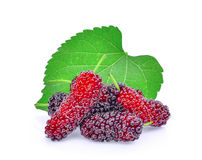 Fresh mulberry with leaf isolated on white Royalty Free Stock Photos