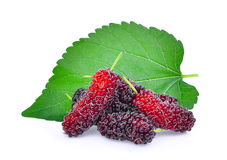 Fresh mulberry with leaf isolated on white Royalty Free Stock Photo