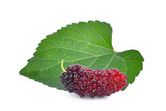 Fresh mulberry with leaf isolated on white Stock Images