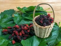Fresh mulberry in a rattan basket and leaf. royalty free stock photography