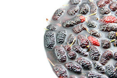 Fresh Mulberry in water Stock Photo