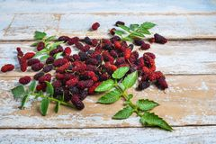 .Fresh mulberry on a wooden background stock image