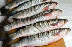 Fresh mullet on a board royalty free stock images