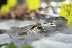 Fresh mullet at fish market royalty free stock photo