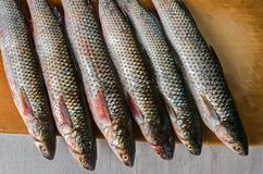 Fresh mullet on a wooden cutting board royalty free stock photos