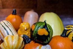 Decorative pumpkins and squash Royalty Free Stock Photo