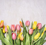 Fresh multicolored tulips, spring, flowers border ,place for text  wooden rustic background top view close up Royalty Free Stock Image