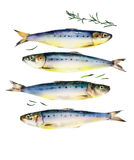 Fresh multiple fish watercolor on white background. Fresh multiple separate fish watercolor on white background for restaurant sign Stock Images