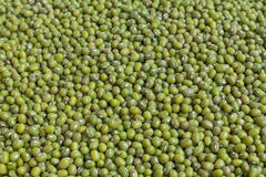 Fresh mung bean grams Royalty Free Stock Photography