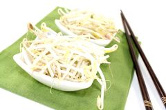 Fresh mung bean sprouts Royalty Free Stock Photo