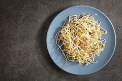 Fresh mung Bean Sprouts, top view. Fresh mung Bean Sprouts on plate on concrete background, major ingredient of asian cuisine, view form above Stock Images