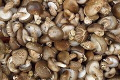 Fresh Mushroom Stock Photo