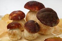 Fresh mushroom Stock Photography
