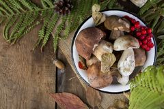 Fresh mushroom boletus. Fresh forest mushroom boletus on the background of autumn leaves Stock Images