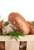 Fresh mushroom champignon with twig dill Stock Images