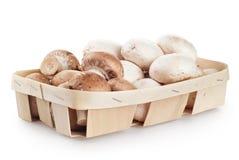Fresh mushroom champignons Stock Images
