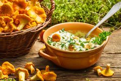 Fresh mushroom with cream and parsley are in the forest Stock Image