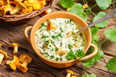 Fresh mushroom with cream and parsley are in the forest Stock Photography