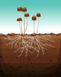 Fresh mushroom growing on land Stock Photo