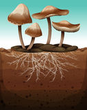 Fresh mushroom with roots underground Stock Images