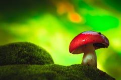 Fresh mushroom russula white stalk grows on moss Royalty Free Stock Photos