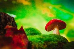 Fresh mushroom russula white stalk grows on moss Royalty Free Stock Photography