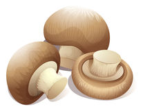 Fresh mushroom in three pieces Stock Photography