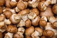 Fresh mushrooms Stock Image