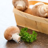 Fresh mushrooms Stock Images