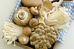 Fresh mushrooms Royalty Free Stock Photos