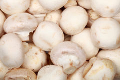 Fresh mushrooms Royalty Free Stock Image