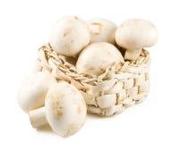 Fresh mushrooms Stock Photos