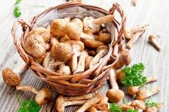 Fresh mushrooms (Armillaria mellea) Royalty Free Stock Photography