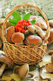 Fresh mushrooms and ashberry branch in basket Royalty Free Stock Image