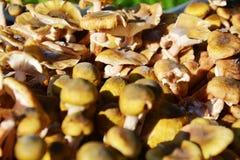 Fresh mushrooms background Stock Photos