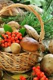 Fresh mushrooms in basket Stock Photo
