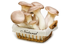 Fresh mushrooms in a basket. King trumpet. Stock Image