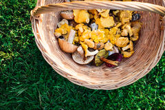 Fresh mushrooms in a basket, top view Royalty Free Stock Photography