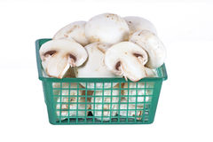 Fresh mushrooms in a basket Stock Photography