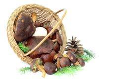 Fresh mushrooms basket Stock Images