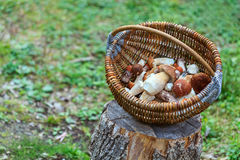 Fresh mushrooms in basket Stock Photography